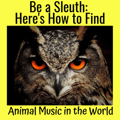 Be a Sleuth: Here's How to Find Animal Music in the World