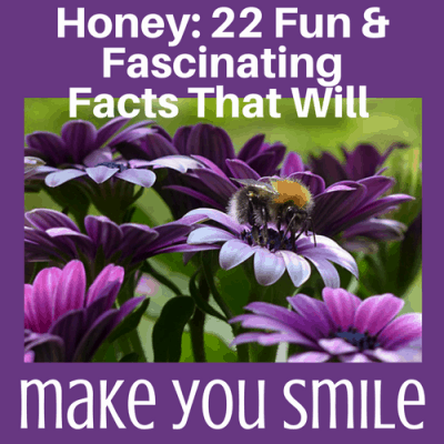 Honey: 22 Fun & Fascinating Facts That Will Make You Smile