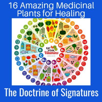 16 Amazing Medicinal Plants for Healing: The Doctrine of Signatures