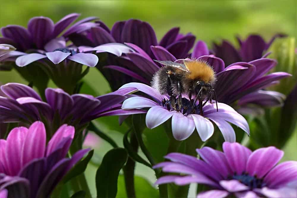benefits of honey, purple flowers with bees