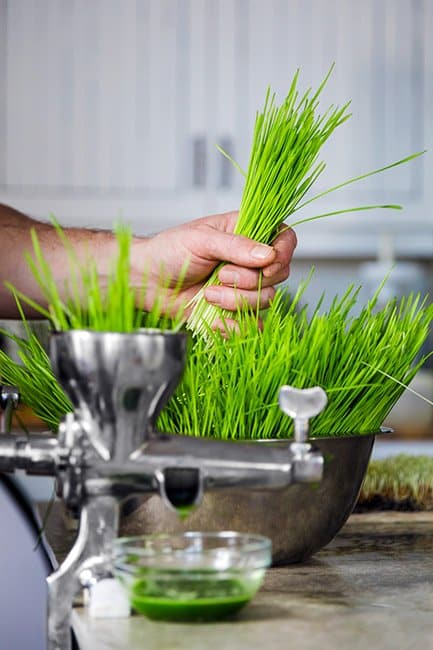 benefits of wheatgrass, good parenting brighter children, benefits of drinking wheatgrass, what is wheatgrass? is wheatgrass gluten free? wheatgrass juice