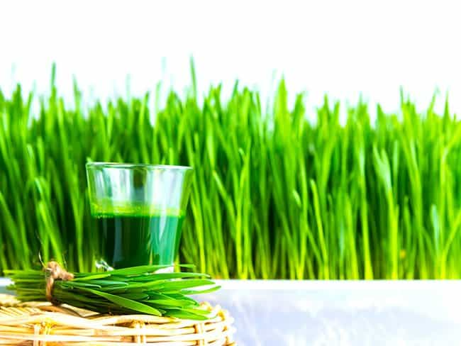 benefits of wheatgrass, Good parenting brighter children, fresh wheatgrass, health benefits of wheatgrass, how to eat wheatgrass, how to grow wheatgrass, is wheatgrass gluten free? what is wheatgrass