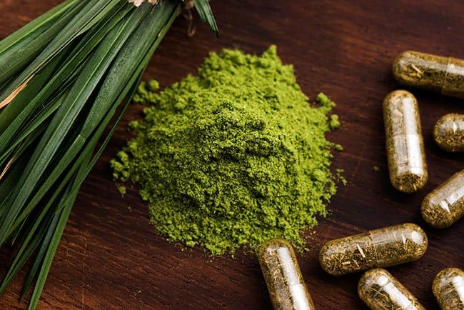 benefits of wheatgrass, good parenting brighter children, benefits of drinking wheatgrass, wheatgrass juice, what is wheatgrass good for? barley grass juice powder benefits