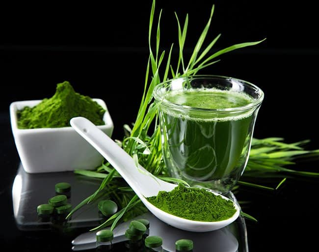benefits of wheatgrass, Good Parenting Brighter Children, benefits of drinking wheatgrass, is wheatgrass gluten free, what is wheatgrass? wheatgrass, wheatgrass juice