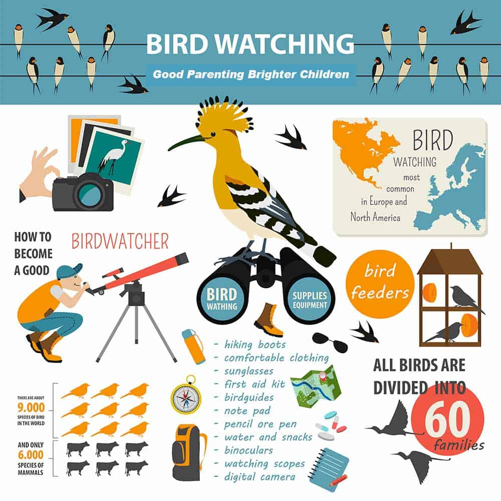 bird watching, infographic on bird watching