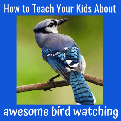 How to Teach Your Kids About Awesome Bird Watching