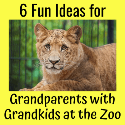 6 Fun Ideas for Grandparents with Grandkids at the Zoo